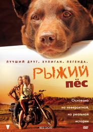Рыжий пес